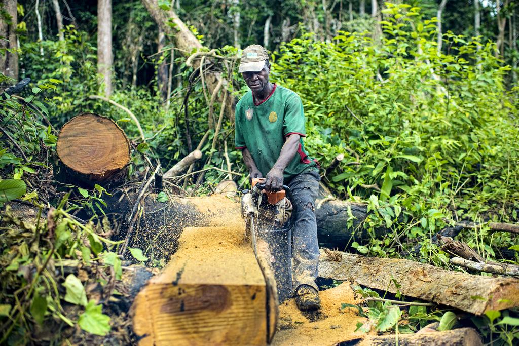 Un exploitant artisanal dans la forêt équatoriale