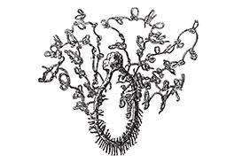 Cordelettes à Nœuds